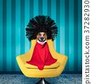 dog  at hairdressers salon 37282930
