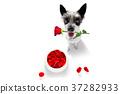 happy valentines dog 37282933