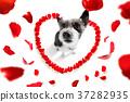happy valentines dog 37282935