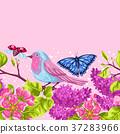 自然 春天 春 37283966