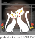 Two cats sitting on the window 37284357