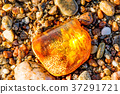 Amber on a beach of the Baltic Sea 37291721