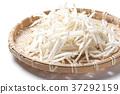 콩나물, 야채, 채소 37292159