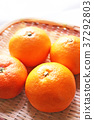 식자재, 과일, 감귤 37292803