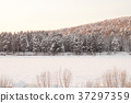 Very beautiful snow-covered forest at sunset 37297359
