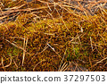 Photo forest background. Autumn forest litter 37297503