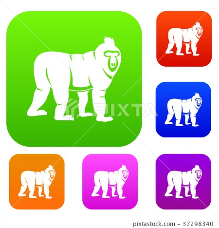 Mandrill monkey set color collection 37298340