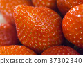 Close-up detail of a fresh red strawberry 37302340