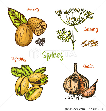 Herbs, condiments and spices. nutmeg and 37304294