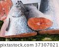 Fish exposed in market 37307021