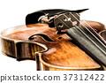 violin, violins, stringed instrument 37312422