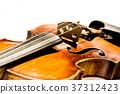 violin, violins, stringed instrument 37312423