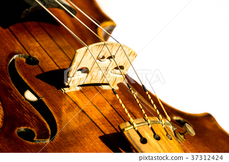 violin, violins, stringed instrument 37312424