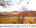 hachimantai, autumnal, fall 37317286