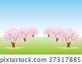 樱桃树 37317885