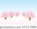 樱桃树 37317886