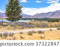 tekapo, lake, southern 37322847