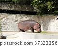 河馬 動物園 上野動物園 37323356