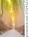Bamboo garden in forest in the park 37324321