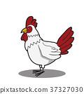 cartoon funny Chicken 37327030