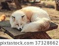 草莓,茶plax狐狸,狐狸狐狸 37328662