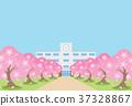 櫻花樹 37328867