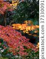 風景 日本 遊覽 37330091