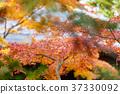 風景 日本 遊覽 37330092