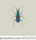 tiger, beetle, bug 37331745