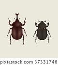 甲蟲 37331746