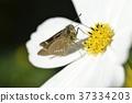 花朵 花卉 花 37334203