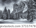 Snowy forest in the mountain,landscape of Dolomiti 37337478