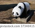 panda, pandas, objet 37340415