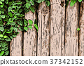 green ivy wall for background. nature concept 37342152
