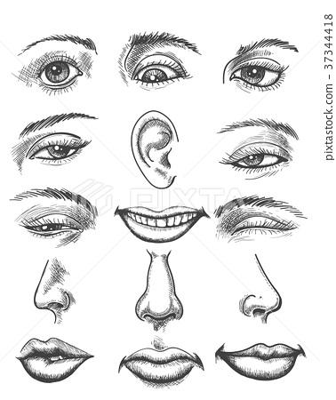 vintage sketch human face parts stock illustration 37344418 pixta