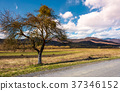 trees along the country road through rural fields 37346152