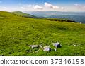 grassy alpine meadow of Polonina Runa 37346158