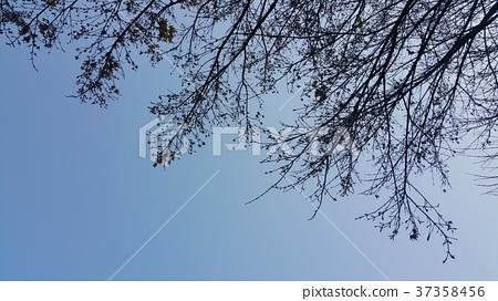枝椏中的天空 37358456
