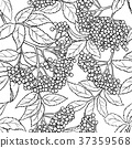 elderberry, seamless, pattern 37359568