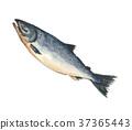 鲑鱼 37365443