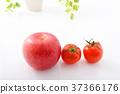 蘋果 西紅柿 番茄 37366176