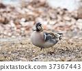 bird, birds, fowls 37367443