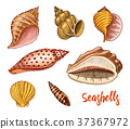 seashell, sea, shell 37367972