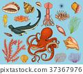sea, fish, nautilus 37367976