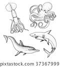 鱼 矢量 矢量图 37367999