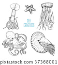 Fishes or seafood or sea creature nautilus 37368001