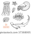 sea creature nautilus pompilius, jellyfish and 37368005
