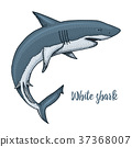 sea creature white shark. engraved hand drawn in 37368007