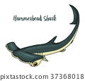 shark, hammerhead, vector 37368018