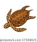 乌龟 海 绿色 37368025